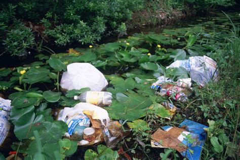 Free picture: litter, garbage, dumped, wetland area, water
