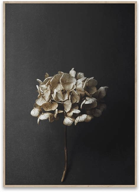 Still Life 04, 50x70 fra Paper Collective