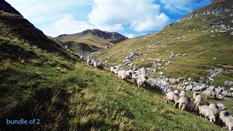 Herd of Sheep in the Mountains by TechMovies   VideoHive