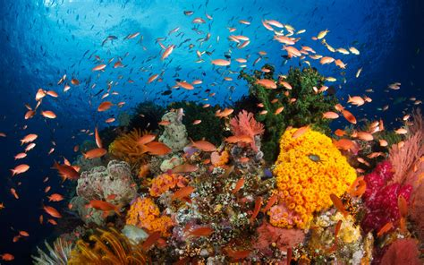 Hd Wallpapers Ocean Coral Reefs With Corals, Exotic