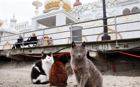 US is overrun with more than 50 million feral cats | Al