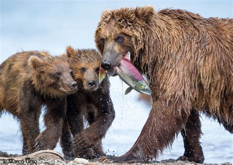 Wildlife Photographer of the Year | Royal BC Museum