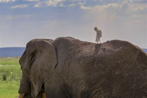 Why Visit Amboseli National Park – Flash McTours and Travel